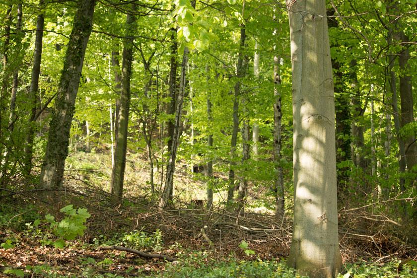 Wald direkt hinterm Haus